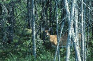 Planos gratuitos para um suporte caseiro Box cervos
