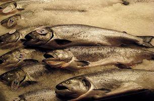 Diferença entre King Salmon & Salmão vermelho