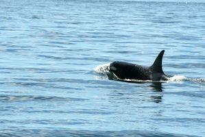 Viagens observação de baleias na Califórnia