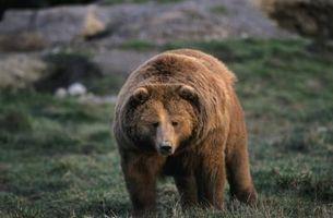 Coisas para saber sobre Kodiak Island