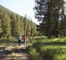 Como fazer um caminho Homemade in the Woods