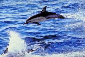 Como nadar com golfinhos em San Diego