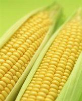 Vapor ou ferver milho?
