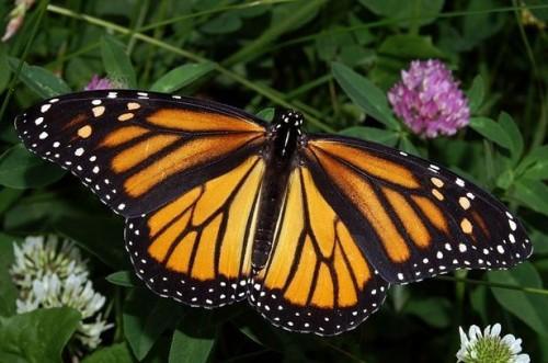 Como visitar borboleta Town, EUA