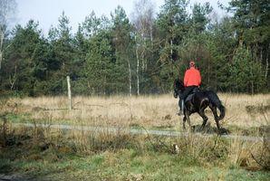 Selas australianas Vs.  Treeless selas para equitação de fuga