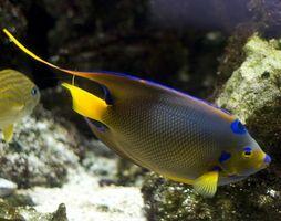 Como solucionar um Lowrance Fish Finder