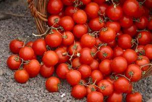Como congelar tomates por um Basil Pesto