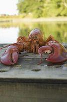 Como Enviar lagosta refeições