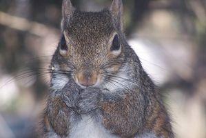 Locais para Hunt Squirrel em Texas