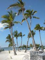 Motéis em Fort Lauderdale Praias