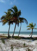 Florida Saltwater Licença de Pesca