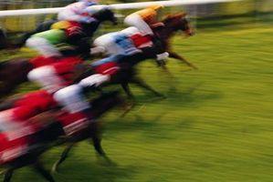 Quais são os deveres de um Horse Racing Steward?