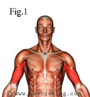 Como trabalhar para fora seus bíceps com haltere