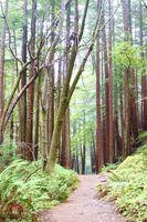 ATV trilhas na Califórnia Redwoods