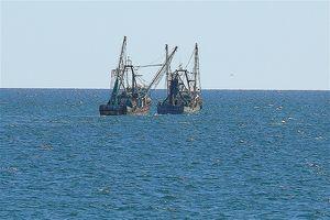 Dicas para costeira Rocky Point Pesca no México