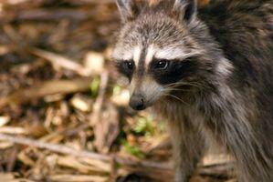Florida Fur Interceptação Leis