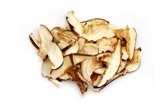 Como preservar Cogumelos Shiitake
