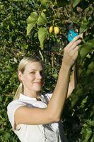 Oportunidades para os adolescentes para trabalhar no estrangeiro em Nível Básico Jobs