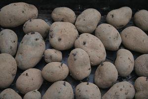 Como preservar Batatas Com Lime