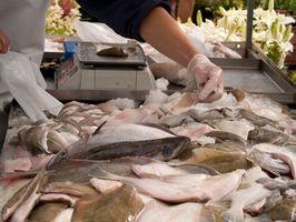 Solha de verão Dicas de pesca