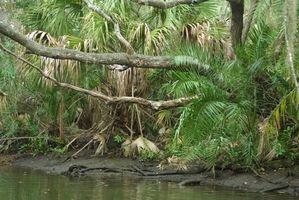 Tubulação de água em parques estaduais da Flórida