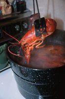 Como manter Seafood Vivo Overnight