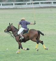 Informações sobre cavalo Polo