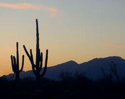 Viagens de campo para Quartzsite, Arizona