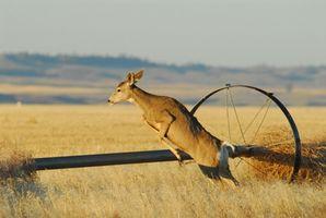 Privado Caça Propriedade Deer in Ohio