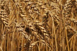 Substitutos para Rachado trigo