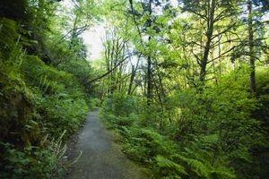 Razões para viajar, o Oregon Trail