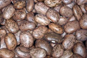 Pinto Beans Instruções de Culinária