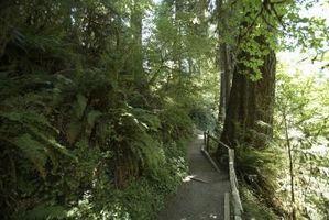 Hotéis Perto da Floresta Hoh Rain em Washington