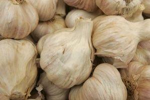 Eu preciso Instruções para uma Acme Terra Cotta Garlic Baker
