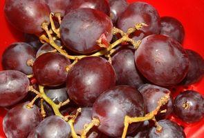 Como fazer vinho por esmagamento das uvas com os pés