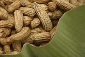 Como se preparar Roasted Peanuts