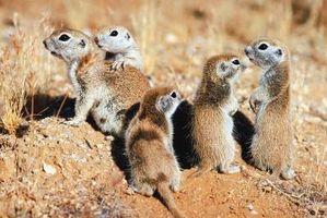 Como fazer uma armadilha para os Esquilos