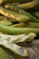 Como se preparar vagens de ervilha