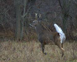 Estado do terreno zonas de caça em Nova Iorque