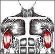 Como reduzir a dor muscular depois de um treino