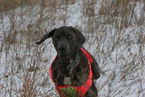 Leis sobre caça com cães
