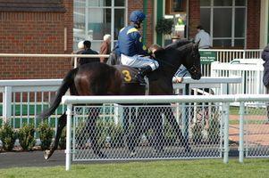 Kentucky Férias Cavalo