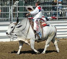 Lista de Touro Escolas de Equitação