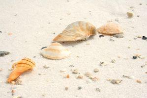 Beach Cottages em Sarasota, Florida