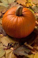 Como usar Raw Pumpkin