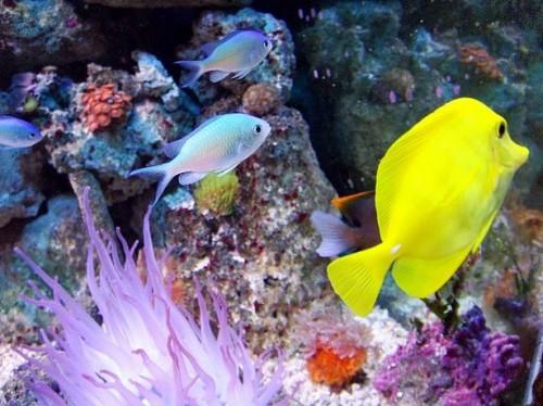 Fatos sobre peixes de água salgada