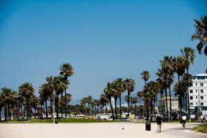 Atividades em Venice, Califórnia