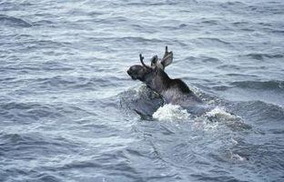 Flatwater Caiaque em Maine