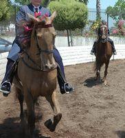 Como parar um cavalo que está fugindo