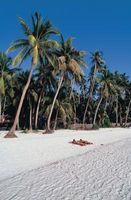 Qual é o clima nas Filipinas Durante o Verão?